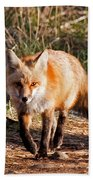 Red Fox In Prospect Park Beach Towel