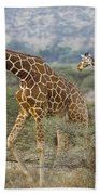 Reticulated Giraffe Beach Towel