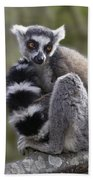 Ring-tailed Lemur Beach Towel