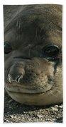 Southern Elephant Seal  Beach Towel