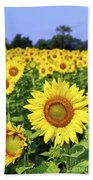 Sunflower Field Beach Towel