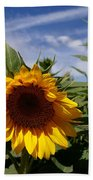 3 Sunflowers Beach Towel
