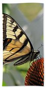 Swallowtail On Coneflower Beach Towel