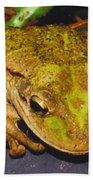 Treefrog Beach Towel