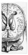 Vesalius: Brain, 1543 Beach Towel