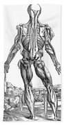 Vesalius: Muscles, 1543 Beach Towel