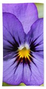 Viola Named Sorbet Blue Heaven Jump-up Beach Sheet