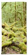 Virgin Rainforest Wilderness Of Fiordland Np Nz Beach Towel