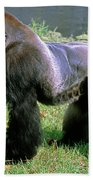 Western Lowland Gorilla Silverback Beach Towel