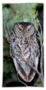Whiskered Screech Owl Beach Towel