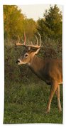 White-tailed Buck In Fall Beach Towel