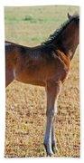 Wild Horse Foal Beach Towel