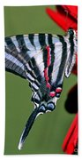 Zebra Swallowtail Butterfly Beach Towel