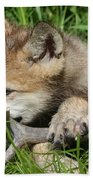 Gray Wolf Pup Beach Towel