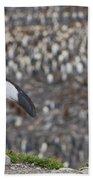King Penguin Beach Towel