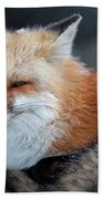 A Red Fox  On The Summit Of Mt Beach Towel