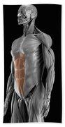 Abdominal Muscles Beach Towel