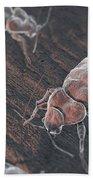 Bed Bugs Cimex Lectularius Beach Towel