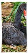 Black Swan At Nest Beach Towel