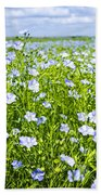 Blooming Flax Field Beach Towel