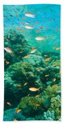 Coral Reef Beach Towel