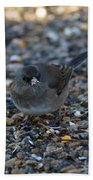 Dark Eyed Junco Beach Towel