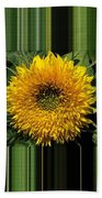 Dwarf Sunflower Named Teddy Bear Beach Towel