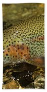 Fly Fishing Patagonia, Argentina Beach Towel