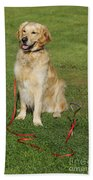 Golden Retriever Dog Beach Towel