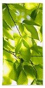 Green Spring Leaves Beach Towel by Elena Elisseeva