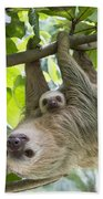 Hoffmanns Two-toed Sloth And Old Baby Beach Sheet