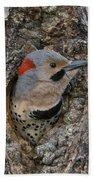 Northern Flicker In Nest Cavity Alaska Beach Towel