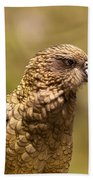 Portrait Of Nz Alpine Parrot Kea Nestor Notabilis Beach Towel