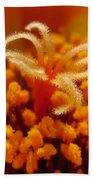 Portulaca In Orange Fading To Yellow Beach Towel