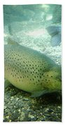 Rainbow Trout Beach Towel by Les Cunliffe