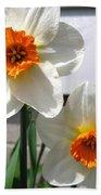 Small-cupped Daffodil Named Barrett Browning Beach Towel