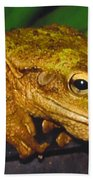 Treefrog Beach Towel