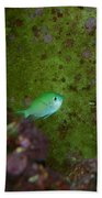 Tropical Fish And Coral Beach Towel
