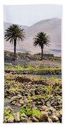 Vineyard On Lanzarote Beach Towel