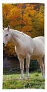 White Horse In Autumn Beach Towel