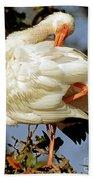 White Ibis Eudocimus Albus Beach Towel