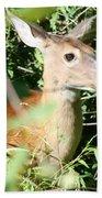 White Tailed Deer Portrait Beach Towel