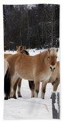 40104-5 Norwegian Horses Beach Towel