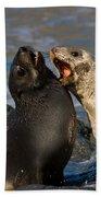Antarctic Fur Seals Beach Towel