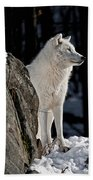 Arctic Wolf Beach Towel