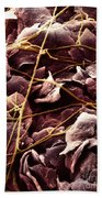 Candida And Epithelial Cells Beach Towel