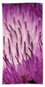 Centaurea From The Sweet Sultan Mix Beach Towel