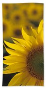 Close-up Of Sunflowers In A Field Beach Towel