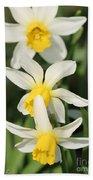 Cyclamineus Daffodil Named Jack Snipe Beach Towel