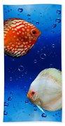 Discus Fish Beach Towel